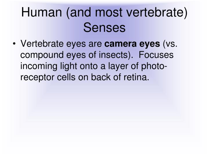 Human (and most vertebrate) Senses