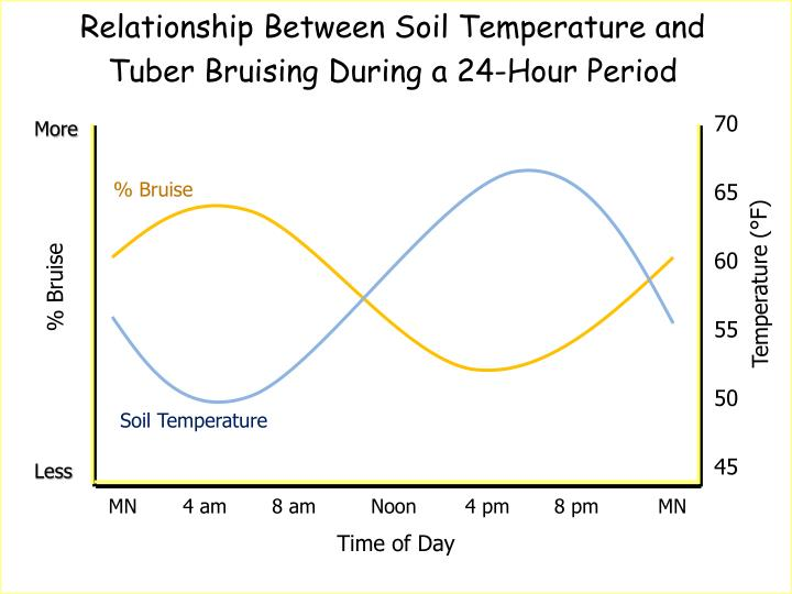 Relationship Between Soil Temperature and Tuber Bruising During a 24-Hour Period