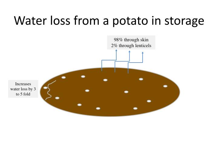 Water loss from a potato in storage