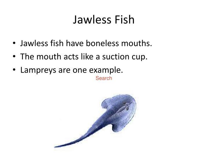 Jawless fish