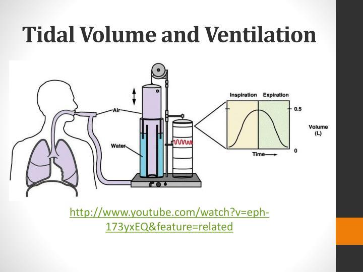 Tidal Volume and Ventilation