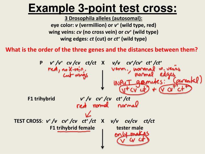 Example 3-point test cross: