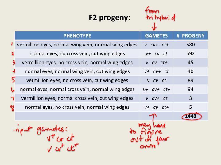 F2 progeny: