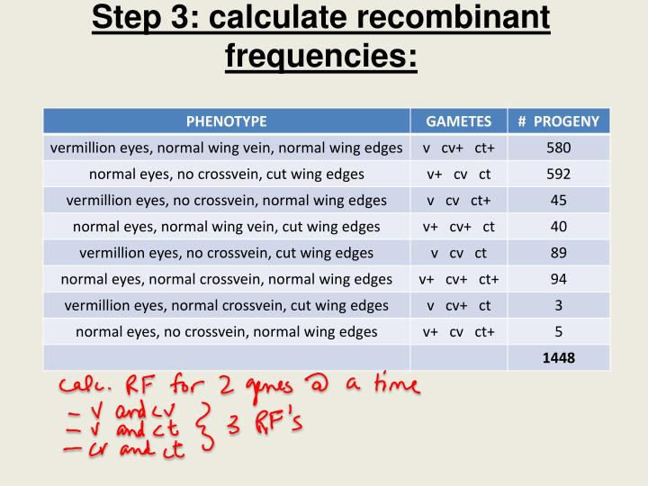Step 3: calculate recombinant frequencies:
