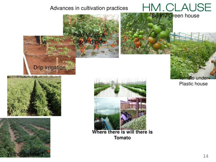 Advances in cultivation practices