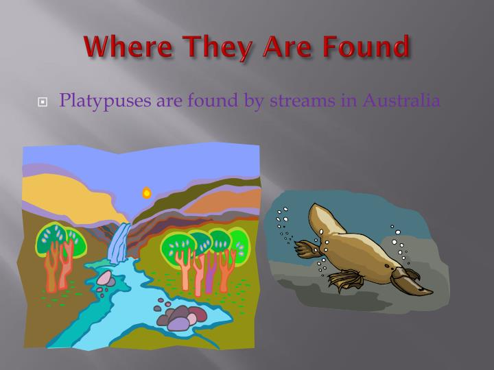 Where They Are Found