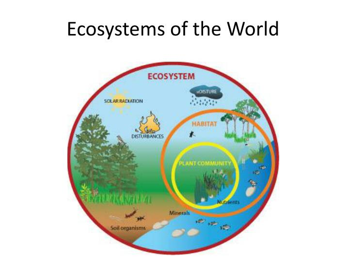 ecosystems of the world n.