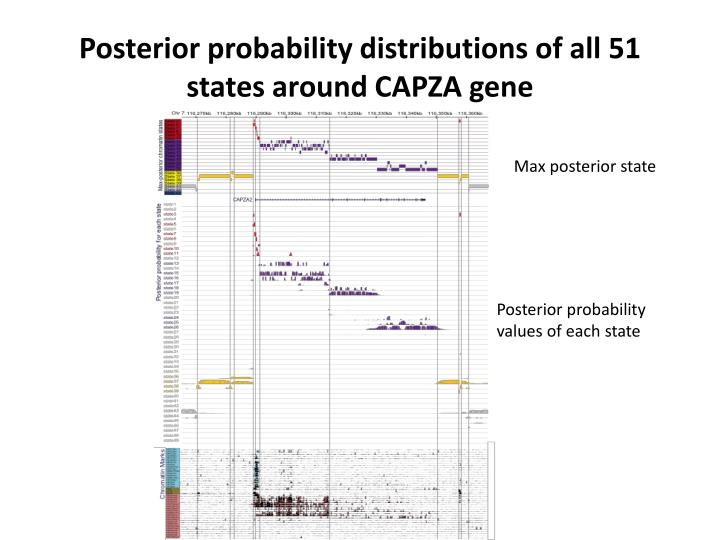 Posterior probability distributions of all 51 states around CAPZA gene
