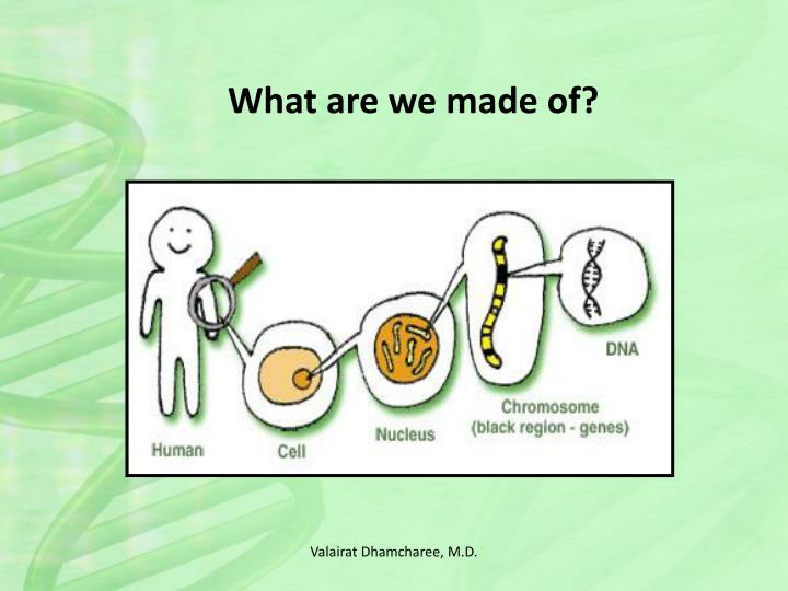 What are we made of?