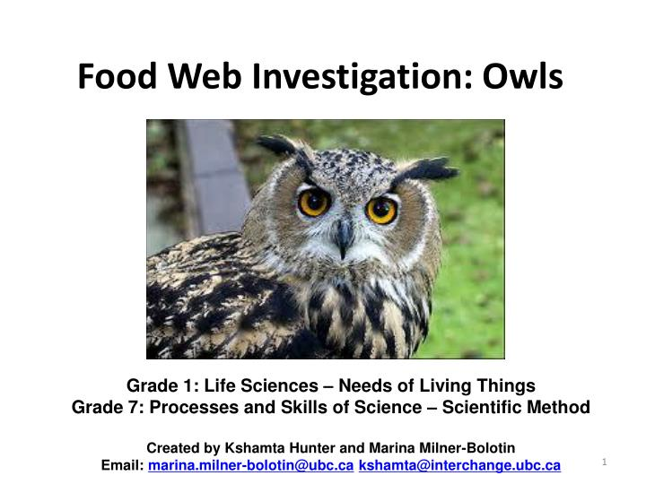 PPT - Food Web Investigation: Owls PowerPoint Presentation - ID:2464675