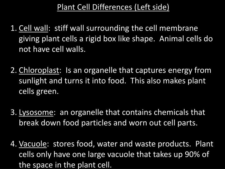 animal cells do not have a D animal cells do not have cell walls and prokaryotic cells do not have a from biology 114 at highline community college.