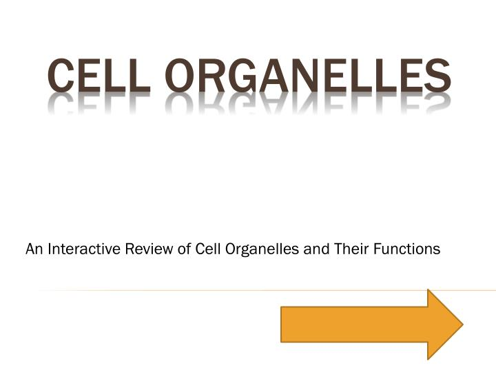 an interactive review of cell organelles and their functions n.