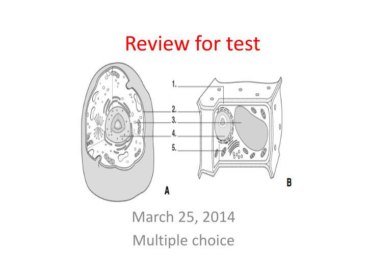 review for test n.