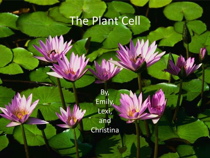 the plant cell n.