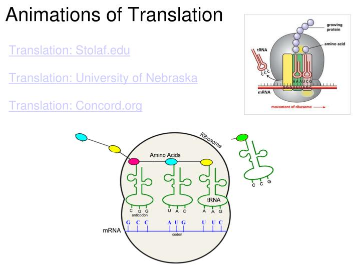 Animations of Translation