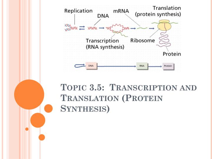 topic 3 5 transcription and translation protein synthesis n.