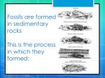 fossils are formed in sedimentary rocks this is the process in which they formed