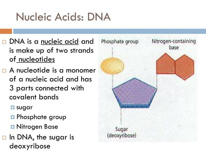Nucleic Acids: DNA