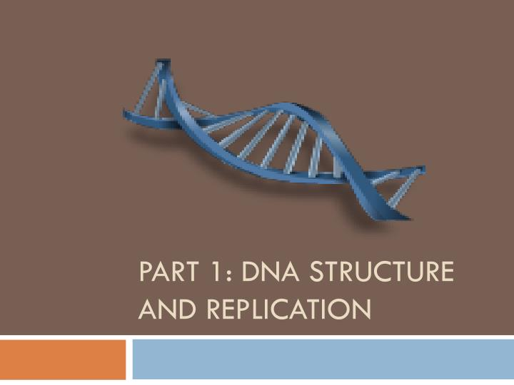 Part 1 dna structure and replication