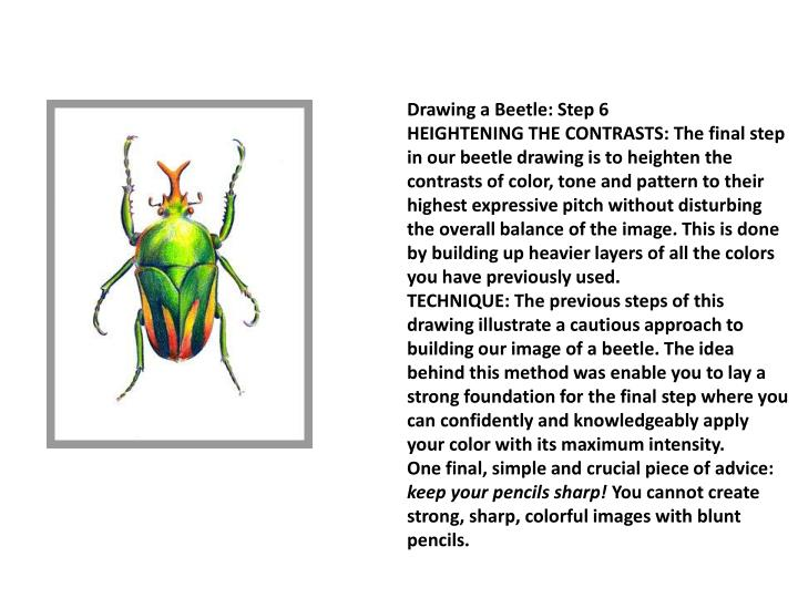 Drawing a Beetle: Step 6