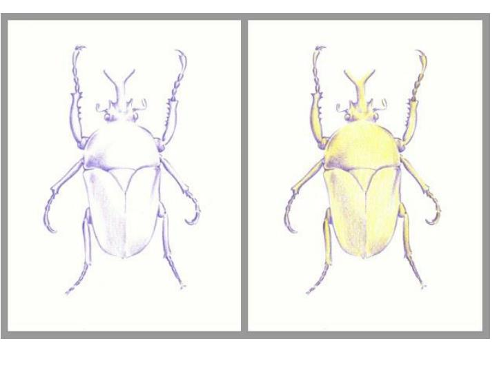 Materials draw bug to take up at least of your paper graphite pencil