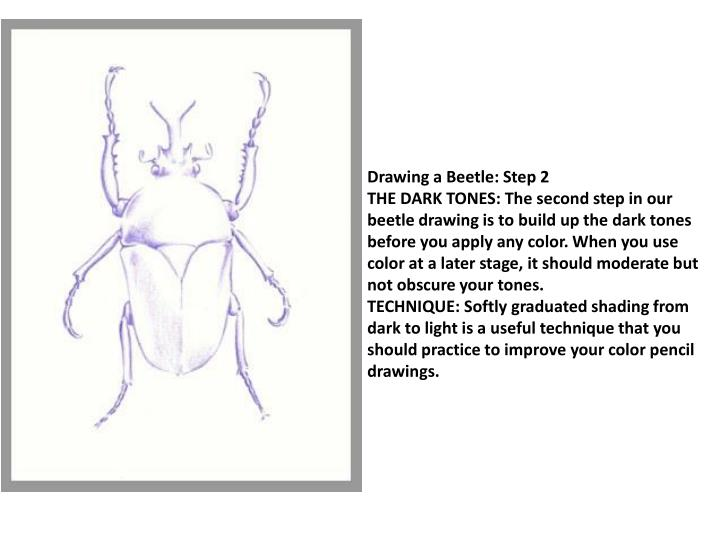 Drawing a Beetle: Step 2