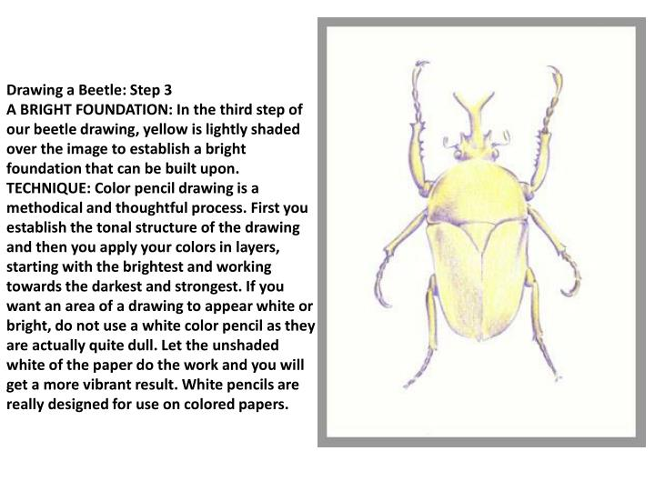 Drawing a Beetle: Step 3