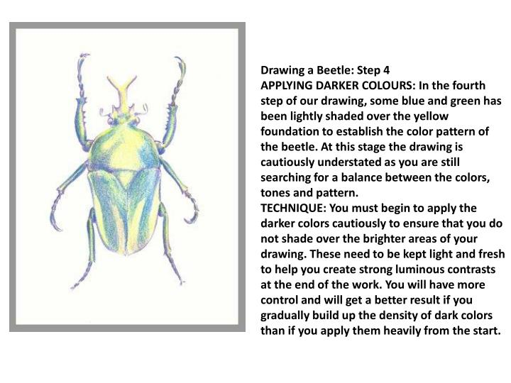 Drawing a Beetle: Step 4