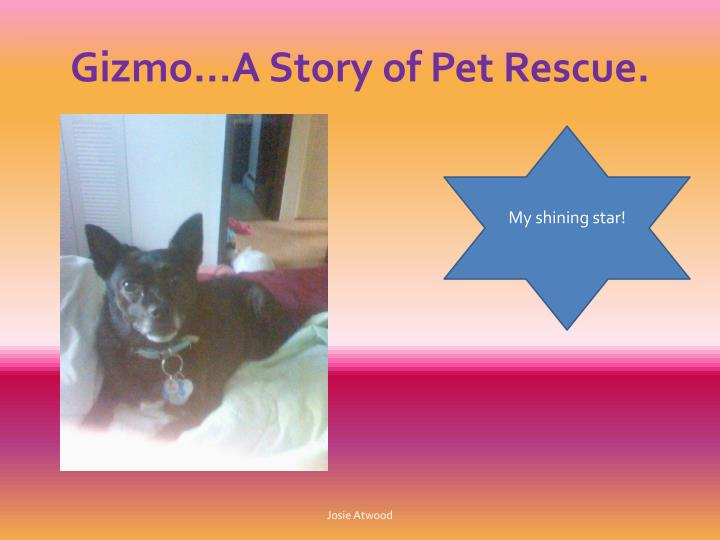 Gizmo…A Story of Pet Rescue.