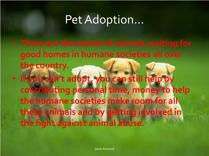 Pet Adoption…