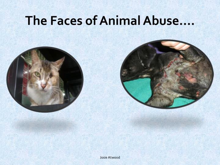 The Faces of Animal Abuse….