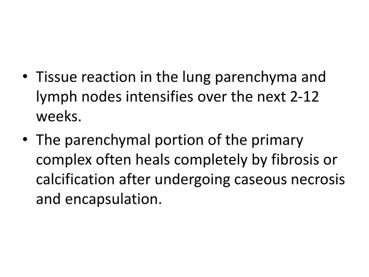Tissue reaction in the lung parenchyma and lymph nodes intensifies over the next 2-12 weeks.
