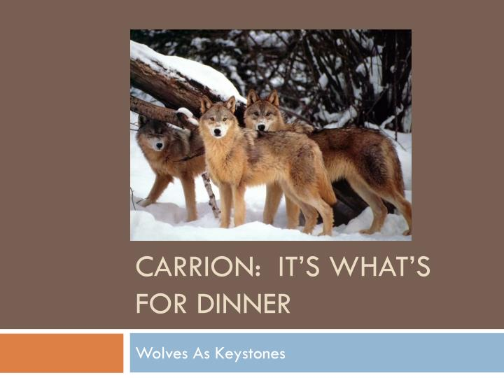 Ppt Carrion It S What S For Dinner Powerpoint Presentation Free Download Id 2472705