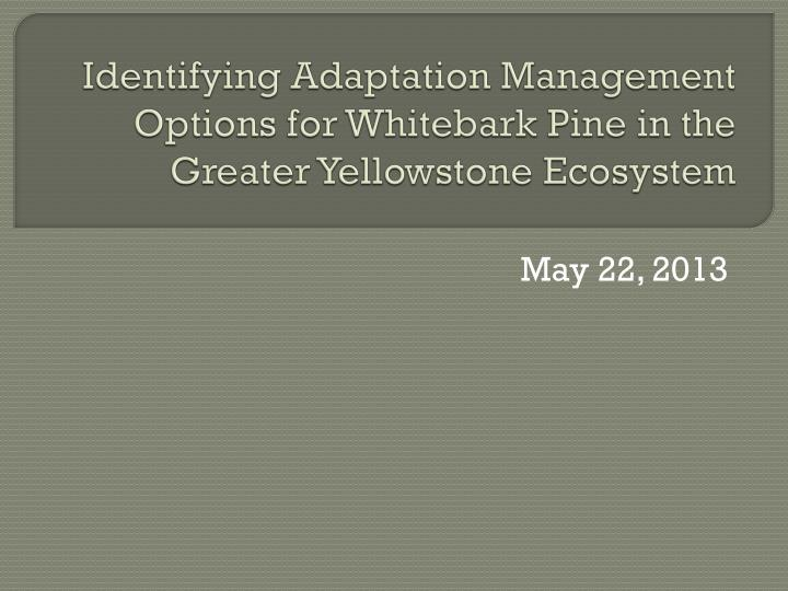 identifying adaptation management options for whitebark pine in the greater yellowstone ecosystem