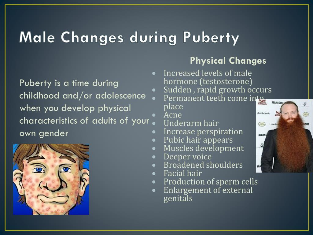 PPT - Male Puberty and Reproduction PowerPoint Presentation - ID:2474068