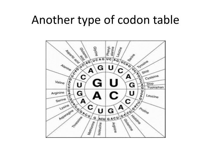 Another type of codon table