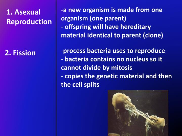 a new organism is made from one organism (one parent)
