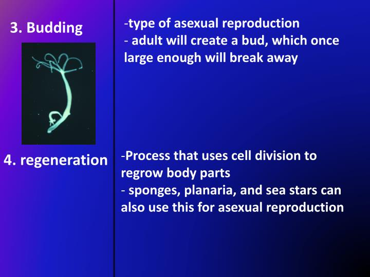 type of asexual reproduction