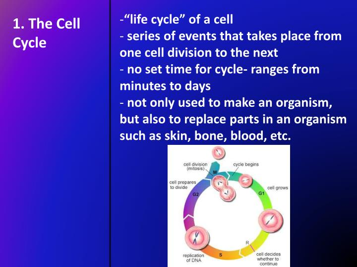 """life cycle"" of a cell"