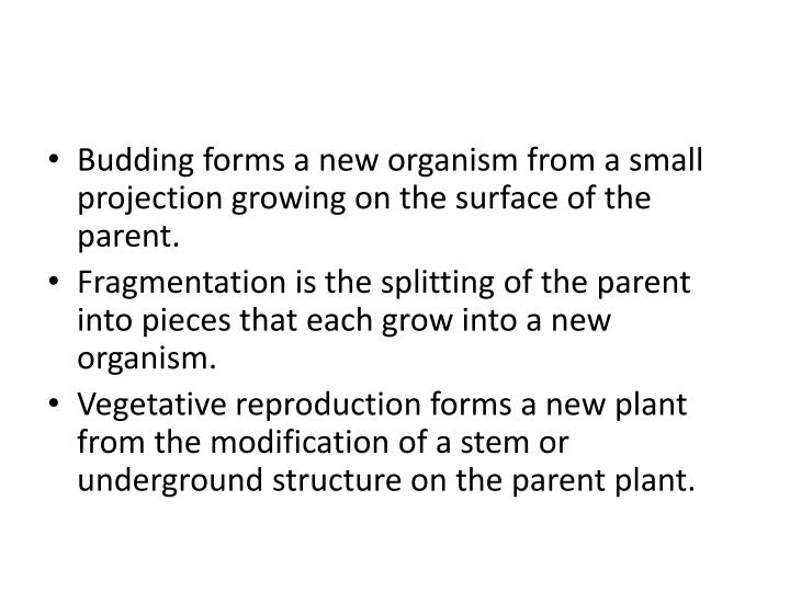 Budding forms a new organism from a small projection growing on the surface of the parent.