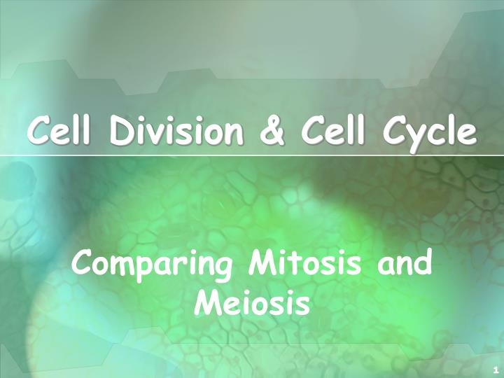 Cell division cell cycle