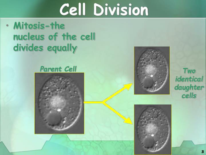 Cell division1