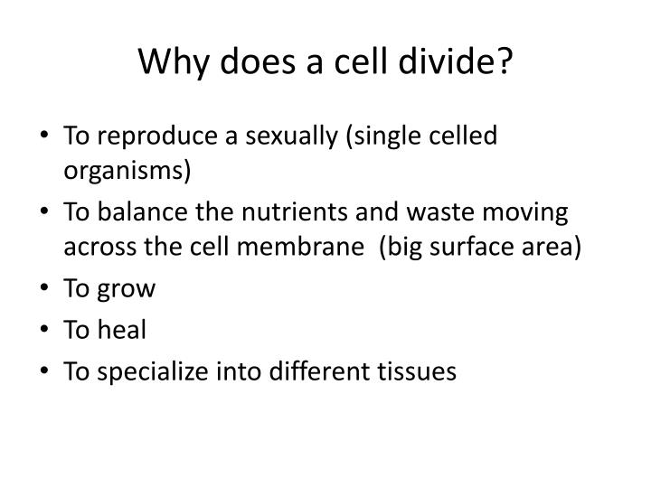 why does a cell divide n.