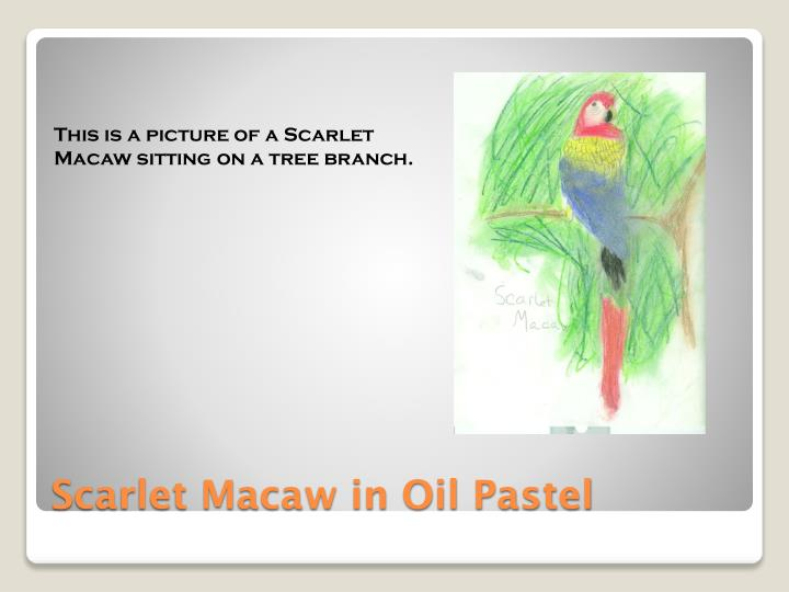 This is a picture of a Scarlet