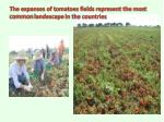 the expanses of tomatoes fields represent the most common landescape in the countries