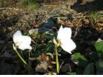 prvo cvetje teloh