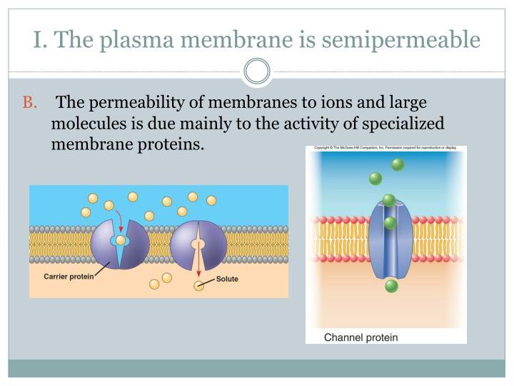 I. The plasma membrane is