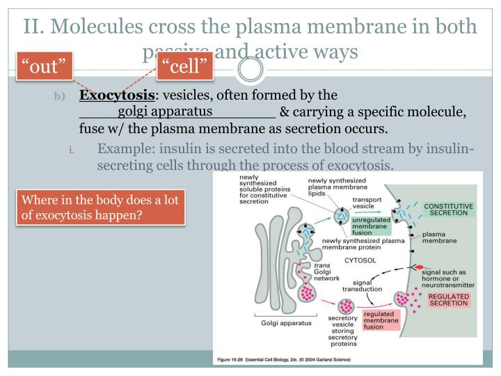 II. Molecules cross the plasma membrane in both passive and active ways