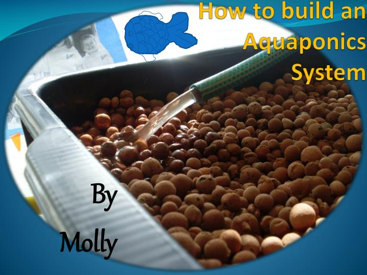 how to build an aquaponics system n.