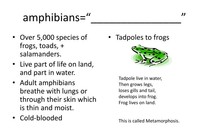 "amphibians=""_______________"""